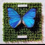 Schmetterlinge - Die Letzte Welt