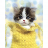 MINI POSTER (40cm x 50cm) - KEITH KIMBERLIN : KITTEN IN A PURSE - Poster