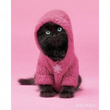 MINI POSTER (40cm x 50cm) - WILDSIDE : CAT IN A HOODY - Poster