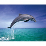 MINI POSTER (50cm x 40cm) - DOLPHIN JUMPING - Poster