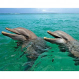 MINI POSTER (50cm x 40cm) - DOLPHINS LAUGHING - Poster